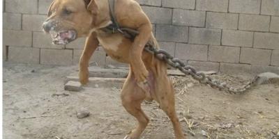 全球十大禁犬