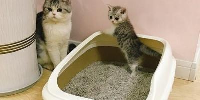 哪些猫砂盆品牌值得推荐,猫砂盆十大品牌